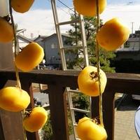 干し柿の干し方最新事情~柿クリップがなくても!