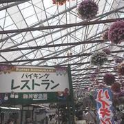 掛川花鳥園へ行ってきました⑤ ふくろうケーキと楽しすぎるお土産売り場♪