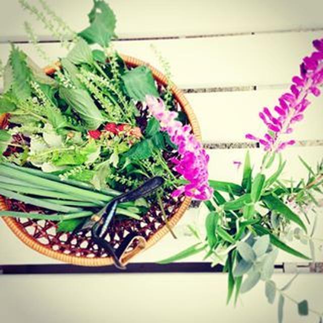 庭に自生した紫蘇の天ざるセット。。。