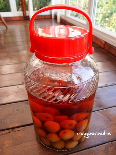 簡単!熟した梅で作る甘さ控えめ手作り梅酒のレシピ・作り方