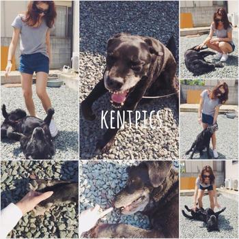 愛犬KENT君。