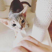 猫と一緒にお掃除( ꒪⌓꒪)