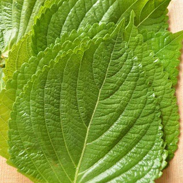 【発酵食品】 新米の季節。ご飯のお供!えごまの葉のキムチ(自家製キムチの素使用)