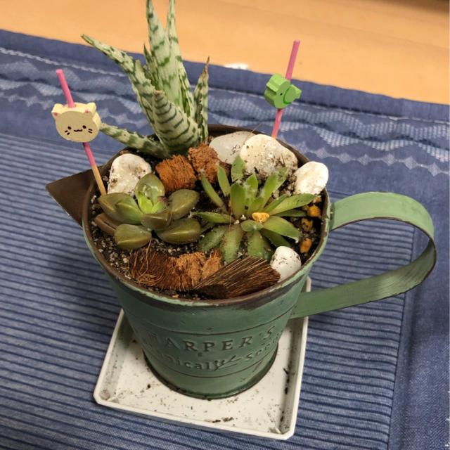 多肉植物の寄せ植え☆