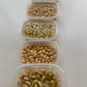 乾燥大豆ののゆで方 市販の水煮や蒸し大豆には無い美味しさ✨