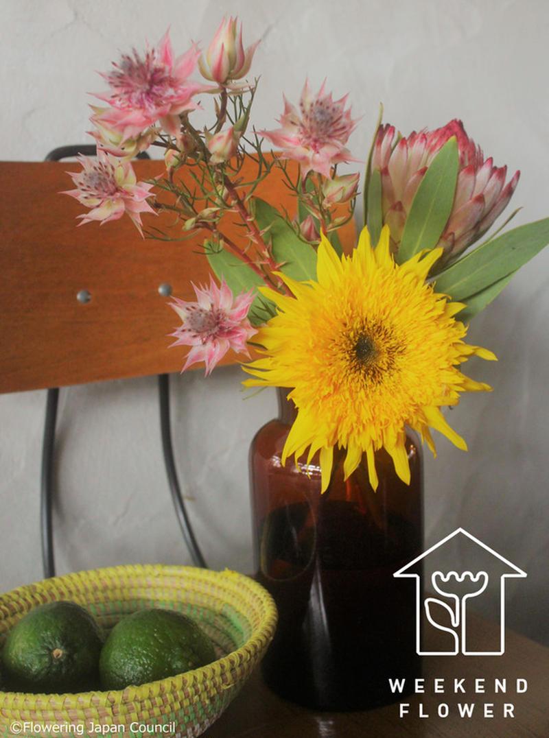 今、「ワイルドフラワー」とよばれるオーストラリア原産の花々が人気です。<br>ヒマワリもクシュクシュ...