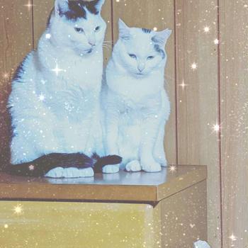 おはようございます。台所の椅子の上でご飯を待つ2匹可愛い〜朝から親バカですみません...