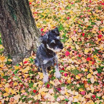 BOZZ@落ち葉の絨毯。