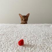 ひめちゃん、毛布を克服⁇