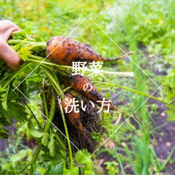 野菜を買ったら汚れが気になる⁉ 洗い方は?農薬は?【ゆるベジらく膳やさい料理教室】