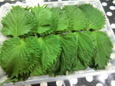 大葉のゴマ風味のピリ辛漬け(レシピ)