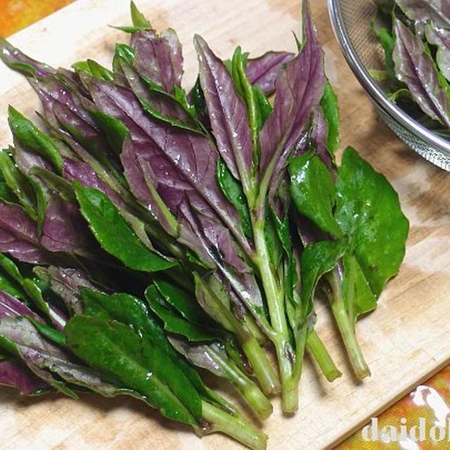 独特風味のネバネバ野菜 美しい赤紫色の金時草   加賀野菜