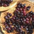 自家製干し葡萄