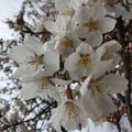 桜子♪さん