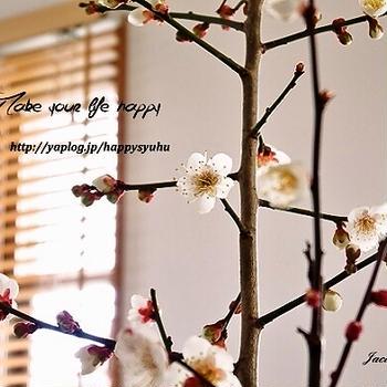 春の訪れとポチ報告の続き