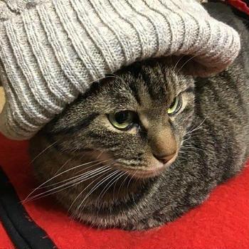 今年はあまり寒くない
