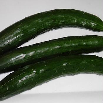 夏野菜*きゅうり初収穫~