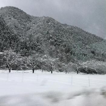 年末年始旅行①  〜滋賀。朽木スキー場にて雪遊び〜