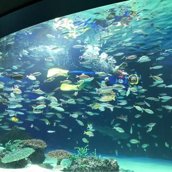 水族館とか