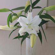 【日記】大好きなお花やさんと、カサブランカ
