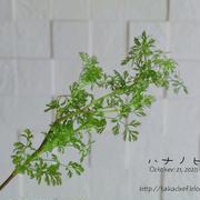 【日記】お花のサブスク 4日目