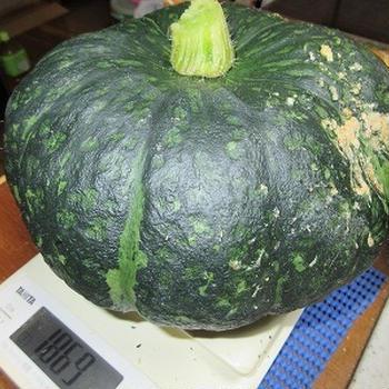 6月もあとわずかになりましたね~初かぼちゃ収穫と巨大化したきゅうり~