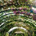 バラが咲き誇るローズトンネル 横浜イングリッシュガーデンの薔薇が見頃を迎えています