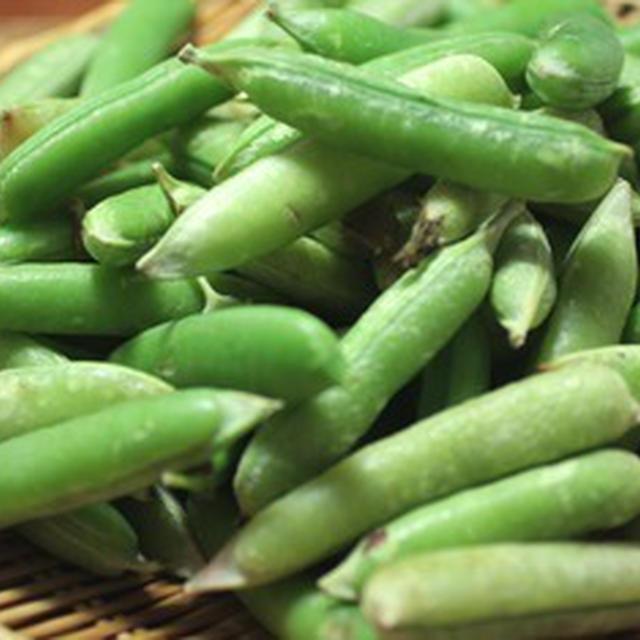 ファラオの豆