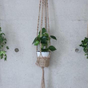 初心者にオススメの育てやすい観葉植物3選