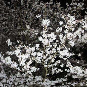 20160402-0403成田ゆめ牧場お花見キャンプ②