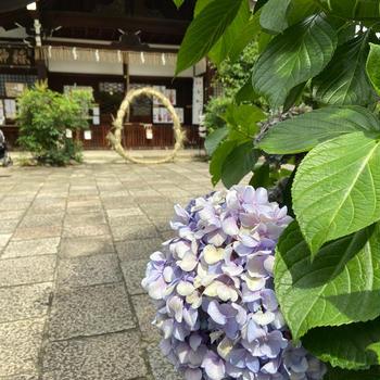 夏越の祓え@京都大神宮