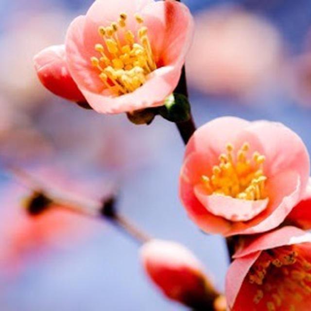 春を思い…