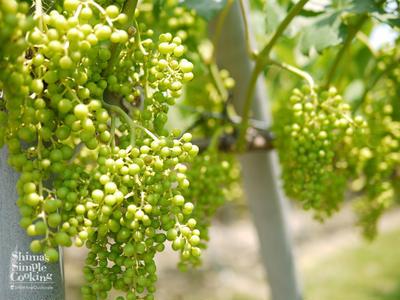 地の物や和フレンチで味わう日本ワインのマリアージュ|畑で味わうワインに感動|造り手の手から感じる愛情の深さ|塩尻ワイナリー見学
