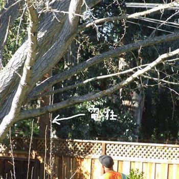 裏庭の電柱から発火