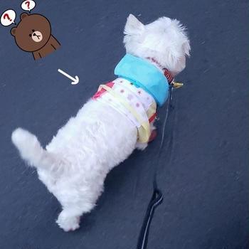 【チワワ&ウエスティ】風が強い日のお散歩
