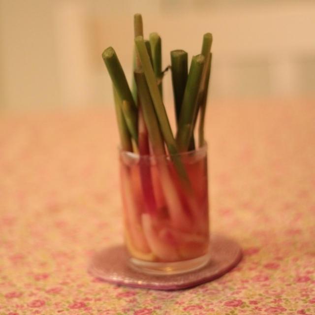 さっぱり谷中生姜の甘酢漬け 待ってましゅ