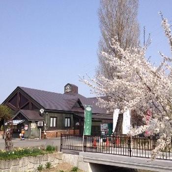 山形の桜は今が見頃 後編