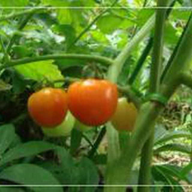 ミニトマト&トマトパスタ&黒ごまパン