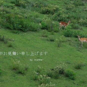 鹿活~お山の鹿たち~