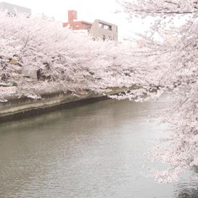 4月11日記 / 春のざわざわ