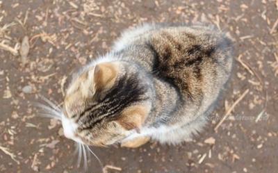 猫の日にみさきまぐろきっぷで猫と戯れる。