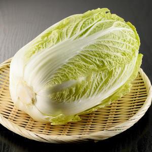 白菜を丸ごと使い切るには?黒い斑点は食べられる?今さら聞けない「白菜」基本のき