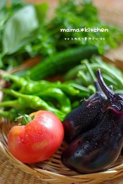 とれたて夏野菜がいっぱい!!のお夕飯~