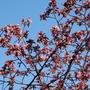 """スターバックスの""""春"""""""