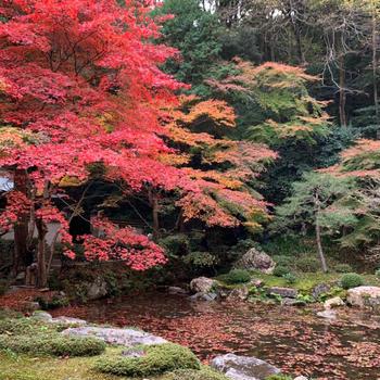 パフェとビールと紅葉の京都③南禅寺の紅葉