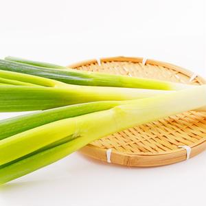 緑の部分は食べられる?おいしさ長持ちの保存ワザは?今さら聞けない「長ねぎ」の基本のき