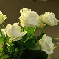 四十本の白い薔薇