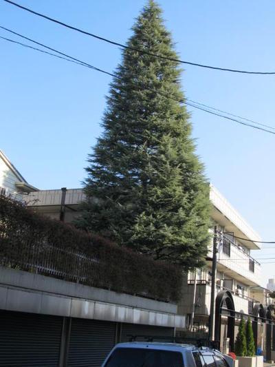 住宅地にでか~い木