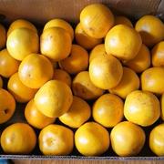 思い切って買ってみた12kgの果物