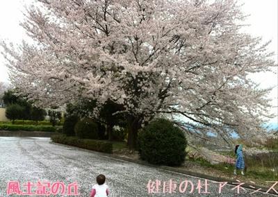 桜とさくらんぼと桃のはな見、アーモンドマフィン
